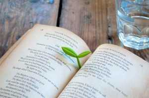 bitki-filizi-kitap-ayraci